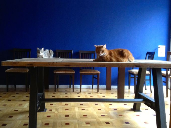 catsontable2