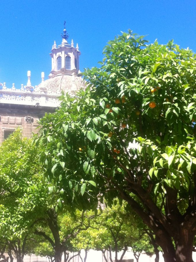 Seville smells like sun, flowers, and oranges. And there are orange trees all over.