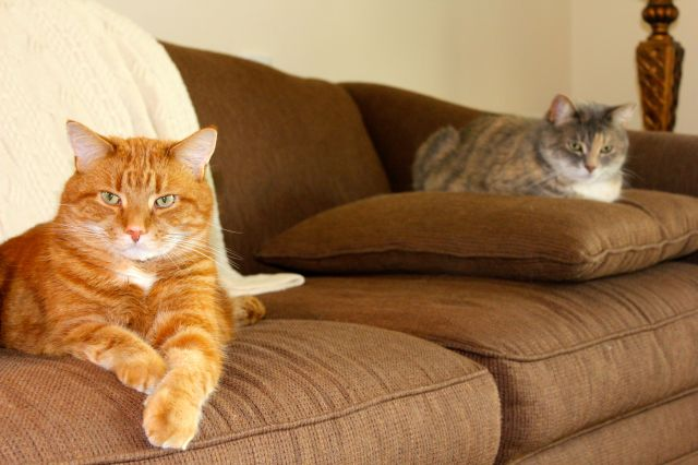 The Diplocats, Gus and Boj, enjoying our government-issued brown couch.