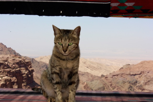 Jacqueline on her perch in a bedouin's shop atop the highest peak in Petra