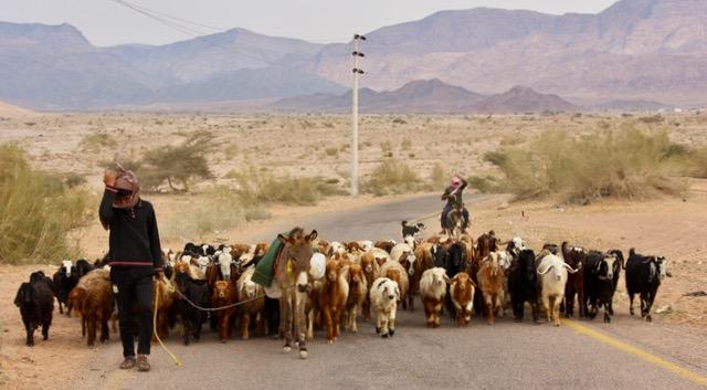 Goat herders en route.jpg