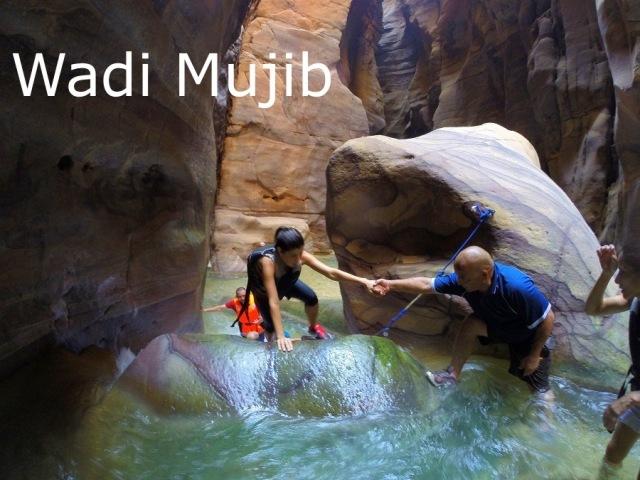 wadimujib.jpg